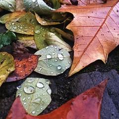 Ideales Wetter, um gemütlich in der Wohnung zu sitzen & mit Freund_innen Kuchen zu futtern & Tee zu trinken. | Ideal weather, to sit in the flat with friends, drink tea  & eat cake.   #Regen #rain #raindrops #deutschland #travel #travelblog #travelingram