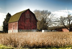 Wisconsin Rural (MalaneyStuff) Tags: county autumn 3 building berlin fall wisconsin architecture barn rural nikon midwest fallcolor farm bluesky farmland elements bayview 1855mm 2014 newberlin d5100
