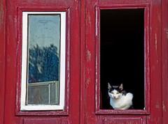 mirada (adrizufe) Tags: portugal window cat ventana nikon sintra gato nikonstunninggallery d7000 adrizufe