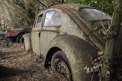 VW Export 1957 (81) (belowodje) Tags: vw volkswagen beetle rusty junkyard kfer kaufdorf messerli