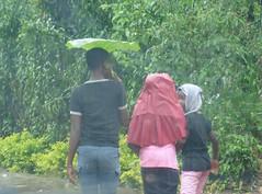 Regenschirm kamerunische Art