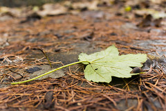Slug's life (PhotographKaty) Tags: autumn brown green nature wet bronze bug garden season leaf ground slug