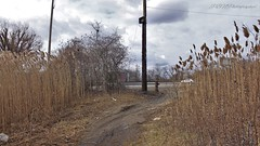 Spring Creek Park, Howard Beach, NY (Laura Gonzalez/ PBNPhotography) Tags: jamaicabay springcreek east new eastnewyork restoration urbanexploration urbex recreation water boats boat ship ocean marine ghostship forgottenwaterway wetlands murder dangerous