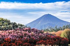2016 Autumn Fuji (shinichiro*) Tags: 20161006sdim4516 2016 crazyshin sigmasd1merrill sd1m sigma24105mmf4dgoshsm october autumn fuji lakekawaguchi