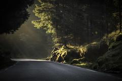 Magic road <3 (D.Sinkute) Tags: mystic faded smokie sunshine road