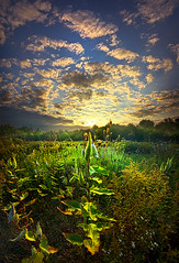 Earth Life (Phil~Koch) Tags: summer clouds travel journey life mood emotions country outdoors colors living heaven weather horizons sunrise lines landscape sun light field art meadow sky twilight horizon beam ray sunset wisconsin scenic vertical photography blue yellow office portrait serene morning dawn nature natural earth environment inspired inspirational season beautiful peace hope love joy dramatic unity trending popular canon camera rural fineart arts fall autumn