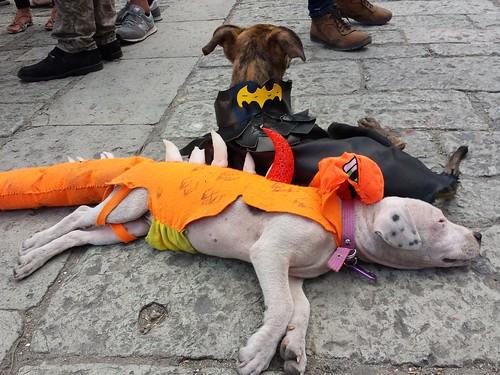 Hunde-Kostüme