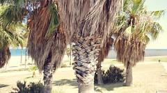 Barcelona, 2k16 #OnePlus3 (callmealeks) Tags: oneplus3 palm trees beach holiday vacation barcelona la barceloneta spain europe sand ocean