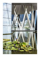 Louis, Lotus and Lily Pads (red stilletto) Tags: singapore marinabay marinabaysands waterlillies lillypads reflection reflections louisvuitton