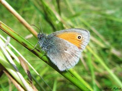 Butterfly 1054 (+360000 views!) Tags: butterfly borboleta farfalla mariposa papillon schmetterling