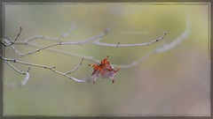 Silence  (gewoon-marieke) Tags: 50mm nikon autumn forest nature dof bokeh leafs