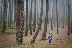 Cuando Caperucita sali del bosque (Luis Marina) Tags: bosque familia liencres troncos niebla fog wood woods cantabria family kid forest pines pinos 35mm nia