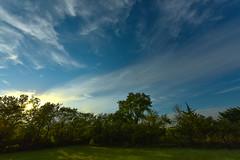 High Clouds (thefisch1) Tags: cirrus cloud horizon pasture tree sky linear flint hills kansas interesting pattern