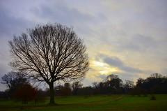 Blickling (ertugrulderya) Tags: uk england photographer blickling naturephotograph naturelovers naturephotography naturephotographer tree forest norwich norfolk