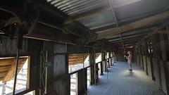 2016.11.17.07.56.44-Kinchega Historic Woolshed (www.davidmolloyphotography.com) Tags: menindee kinchega kincheganationalpark woolshed