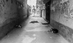 Dhaka Street #77 Road Block (سلطان محمود) Tags: dhaka dhakastreet999 dog day walking sleeping roadside bangladesh symphonyw68 mobilephotography mobile bangladesgh mirpur ihavenocamera iampoor