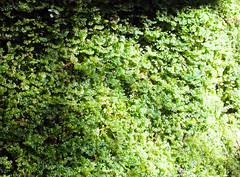 Soft pillow (LeelooDallas) Tags: australia tasmania pyengana halls falls waterfall moss andscape dana iwachow fuji finepix hs20 exr