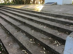 #MountDavidson #SanFrancisco (Σταύρος) Tags: architecture design cementsteps steps mountdavidson sanfrancisco sf park saturdayafternoon mtdavidson san francisco sherwoodforrest city sfist サンフランシスコ thecity σανφρανσίσκο saofrancisco georgedavidson iphone iphone6 takenwithaniphone telephone cellphone cell phone gps iphone6capture iphonecapture backcamera mobilephone appleiphone apple flora fauna trees bushes shurbs leaves windy cold hike climb 1923 cross mountdavidsoncross