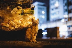 UT (Tridentz | ) Tags: cat cats meow portrait hong kong sony a7 alpha alpha7 fe night neko bokeh animal eyes eye lovely cute     wide open 50mm 50 fe50