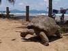 Seychellen-3LaDigue16_20161005-1229 (sabine.haecker) Tags: seychellen seychelles schildkröte turtle ladigue