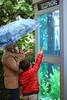 L'appel de la mer... (Vicky Bella) Tags: lanuitduvan2016 nantes france child enfant grandmère pluie parapluie aquarium cabinetéléphonique hbw candid streetphotography telephonebooth