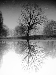 reflection (Darek Drapala) Tags: reflection reflects water waterscape warsaw warszawa winter lumix light trees tree nature panasonic poland polska panasonicg5 park bw blackwhite blackandwhite
