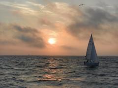Sailing boat at sunset (sander_sloots) Tags: boat sailing noordzee northsea bootje zeilboot sirius stellendam goeree overflakkee water schip ship sun zon seagull zeemeeuw golven waves