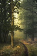 Heading for the great escape... (Rob Scamp) Tags: woodland woods dawn d810 herefordshire morning mist misty 50mm 18 sunrise trees forest robscamp nikon