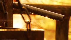 Autumn day/Herbsttag (Ranger56112) Tags: herbst autumn wasser water wassertropfen waterdrop waterdrops sonnig sunny eisen eisenstange iron kette chain deutschland germany rheinlandpfalz rhinelandpalatinate rheinland outdoor spinnweben spiderwebs regentropfen raindrop raindrops