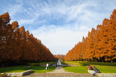 20161204-DS7_6586.jpg (d3_plus) Tags:  a05 building d700 nature  architecturalstructure   kanagawapref   sky park autumnfoliage  japan   autumn tamronspaf1735mmf284dildasphericalif tamronspaf1735mmf284 nikon tamronspaf1735mmf284dildaspherical tamronspaf1735mmf284dild  tamron1735 daily    fall architectural superwideangle wideangle dailyphoto nikond700 touring scenery thesedays street  streetphoto      autumnleaves