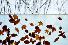 L'automne suspendu (James_D_Images) Tags: fall autumn leaves glass roof trapped bare branches fallen red orange yellow brown green