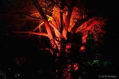 DSC04111 (Twareg) Tags: 2016 aboretum bpw enchanted forest westonbirt bathphotowalk gloucestershire england handheld night nightshot