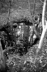 Portal (40Cron) Tags: delamere forrest yashica 35mm electro 35cc ilford ilfosol hp5 monochrome black white winter uk england nature tree reflection