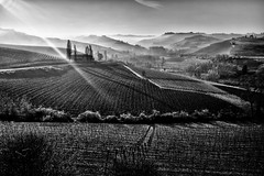 Langhe (francesco_if ) Tags: langhe barolo barbaresco piemonte italia italy landscape blackandwhite monocromo wine natura winter lights sun fog paesaggi hills colline