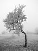 Obstbaumindividuum (alopecosa) Tags: baum eis freiburg kälte obstwiese schönberg winter