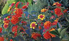 Pintando (I) (Franco D´Albao) Tags: francodalbao dalbao nikond60 colores colours flores flowers efecto effect pintura painting edición edition