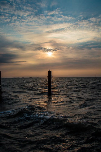 Seagull in the Sunrise; Möwe bei Sonnenaufgang