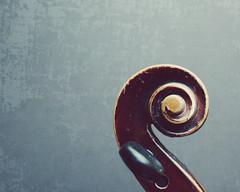 fiddle head (L. Grainne) Tags: life still musical photograph violin instrument fiddle scroll grainne lupen