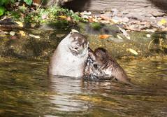 Seeotterwsche (subtrahierer) Tags: nature zoo tiere wildlife natur otter tiergarten nrnberg seeotter
