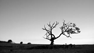 Solitude / Solidão do fotográfo e a árvore