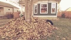 Three Feet High and Rising (Kenneth Wesley Earley) Tags: autumn dog fall leaves season spokane seasonal stack rake pile change northcentral frontyard spokanewa coldsnap 99205 spokanistan emersongarfield htconem8 spokandyland