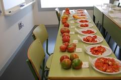 Degustación tomate ecológico puntdesabor 4