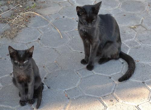 poor skinny cats