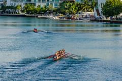 Head of the Indian Creek 2014 (fjblanco8320) Tags: miami crew rowing miamibeach 2014 theu headrace headoftheindiancreek universityofmiamicrew