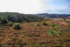 Skansen 4 (hermannauinger) Tags: natur norwegen bergen hermann austevoll auinger
