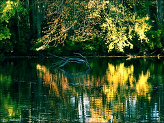 Nature's Dream Catchers (dianealdrich - Please read my updated profile) Tags: autumn trees sunlight lake color reflection fall nature water beautiful photography daylight photo newjersey october colorful waterfront vibrant relaxing gimp vivid naturallight illuminated foliage crisp photograph daytime lovely photographicart sunlit breeze lakeview photoart breezy southjersey lakefront goldenhour digitalphotography fineartphotography vividcolor beautifulscene relaxingscene bumpmapped pittsgrove naturelover newjerseytnc10 dailynaturetnc13 dianealdrich dlaldrich naturesdreamcatchers