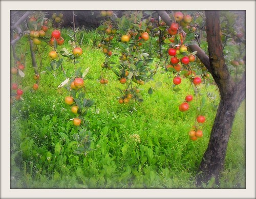 Fairy apple tree