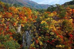 Luxurious  ~ Naruko Gorge ~ (PS~~) Tags: travel autumn trees fern green fall nature beautiful leaves yellow japan pine forest canon river gold stream exposure gallery natural atmosphere vert canyon valley  gorge birch  maples beech  naruko         landscapephotography   snakewood   narukogorge       riotofcolor seaoftrees autumnscenery narukoonsen   northeastjapan theredmountain    forestbath     resortminori  resthoust