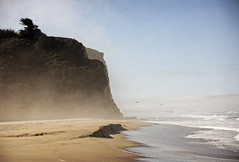Bean Hollow (Michael Brooking Photography) Tags: ocean california cliff tree bird beach fog sand surf waves pacific gull beanhollow michaelbrookingphotography