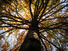 magnificent treetop (Inner Child Dreams) Tags: autumn incredible magnificent treetop